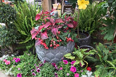 Rosies_Gardens_Carmel_Indiana_Huge_Selection_Most_-Best_Beautiful_Custom_Containers_
