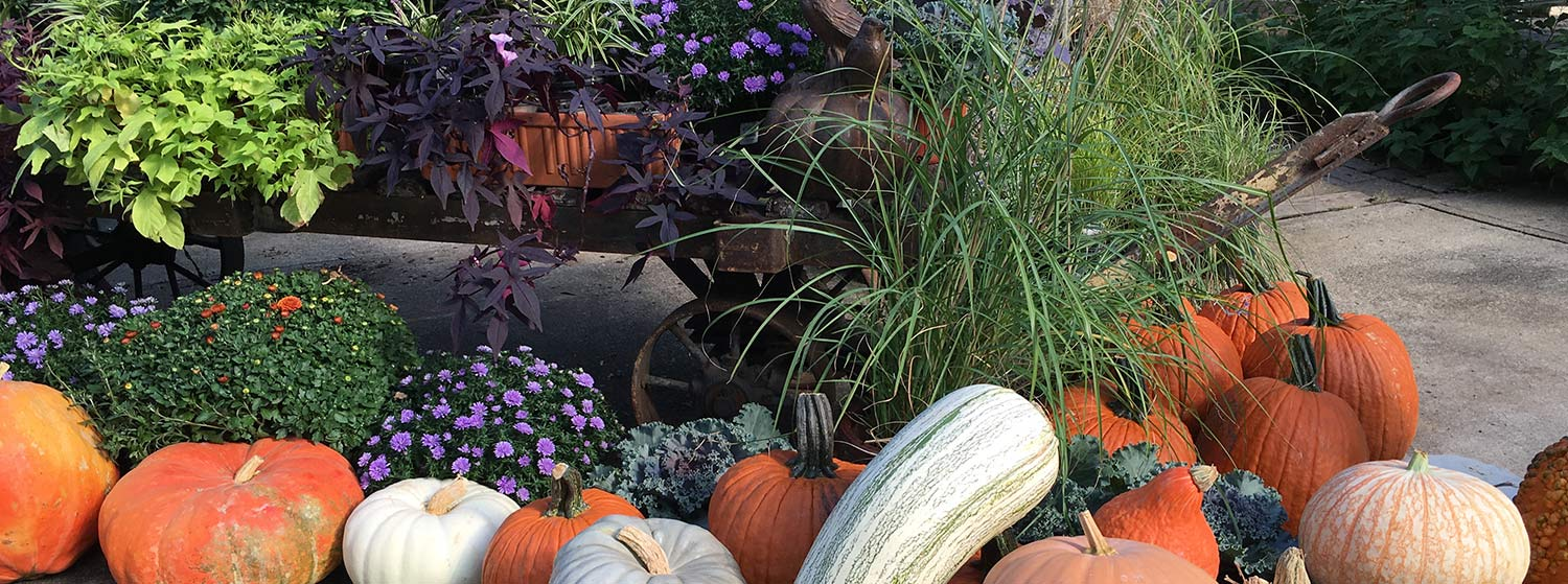 Rosie Gardens | Fall | Plants | Decorations